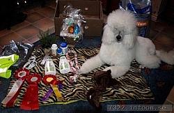 Lucia blickar över sina presenter som hon fick i Tranås.