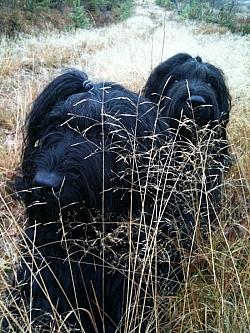Siri & Jazza i höstgräset.