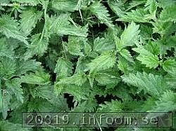 Brännässla:Brännässlans unga blad kan användas till nässelsoppa.Stjälkarna kan efter rötning användas spånad.Under 1600-1700-talet framställdes tyg av nässelfiber(så kallad nättelduk). Förr färgade man även Äggskalunder främst påsk av färsk rot.Man kan använda nässlor till växtfärgning om man tillsätter Alun.Utbredning:Brännässla förekommer påkulturpåverkad kväverik mark i hela landet.