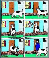 Smart som en ko