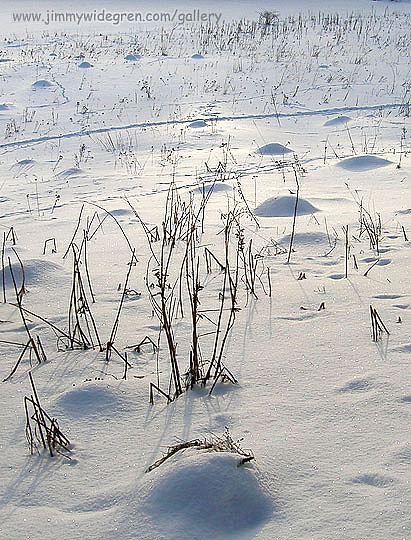 Vinter bilder