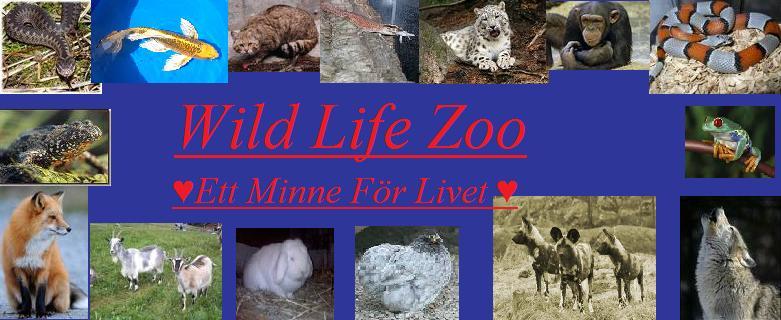 Våra djur  our animals - Barnens Zoo - Wild Life Zoo 28588d6cef01a