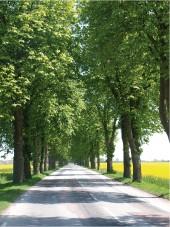 Vägen till Hyltebjär