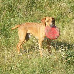 Hundar utan hem skåne
