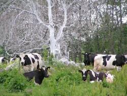 Vila under träd som är täckt av häggspinnarlarv