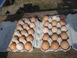 Ägg som har klarat resan på posten. Bild från nöjd köpare