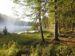 Skogarna runt tjärnarna i Kloten har gott om blåbär, lingon och svamp, vilket ger trevliga avbrott i fisket. Många fina vandringsleder och stigar.
