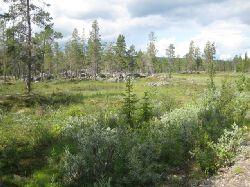 Bilden tagen mellan parkeringen och Hästskoforsen. Fin grusväg går ner till älven och rastplatsen. Otroligt vacker natur och mycket som inte kan återges på bild