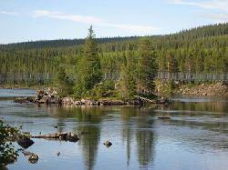 Hängbron över Hästskoforsen, Laisälven. Bilden tagen från den södra sidan, nedströms bron. Här hittade vi dom största harrarna.....