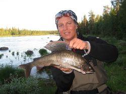 Kvällens rekord.... 1050 g harr !!! Från södra sidan Laisälven, nedom Hästskoforsen, strax före Dellikälvens utlopp..... Vår bästa fiskeplats under dessa tre dagar i Laisälven.