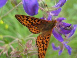 Här blommade det för fullt, fjärilar och insekter mådde gott i den färgprakt som erbjöds här andra veckan i juli