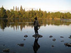 Här har vi vandrat något nedströms Hästskoforsen och kommit fram till Dellikälvens utlopp (syns ej riktigt, men ligger till höger i bild)